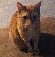 Bella-cat