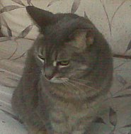 picture of Chrissy the cat