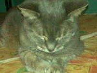 Chrissy-Cat