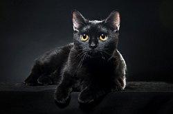 Feline Distemper