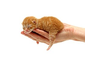 Newborn kitten in someone's hand