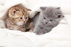 Picture of two kittens for Cat product reviews