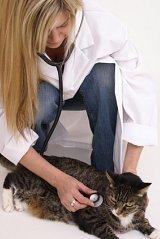 feline kidney disease