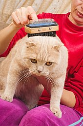picture of acat getting brushed