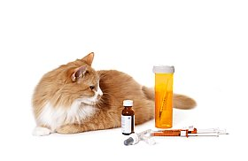 picture of cat sitting next to cat medicine