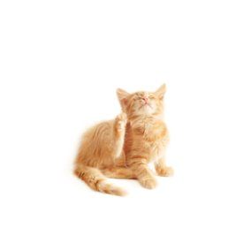 picture of cat itching