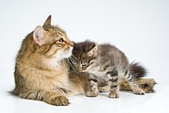 picture of acat with her kitten for cat pregnancy