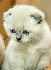 Feline Seizure