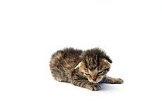 grayish newbornkitten
