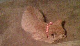 Bella as a kitten