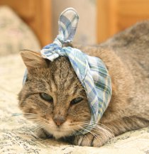 picture of sick cat for cathealth problems