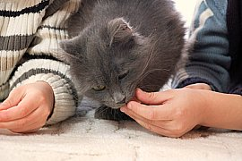 Two kids feeding a cat