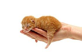 Newborn kitten in someone's hand