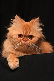 picture of a cat for cat behavior problems