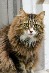 Feline Dandruff
